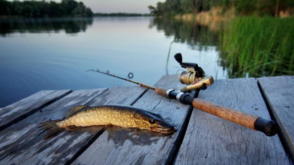 Картинка с рыбалки, приколы демотиваторы